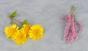 Flores para hechizo de amor